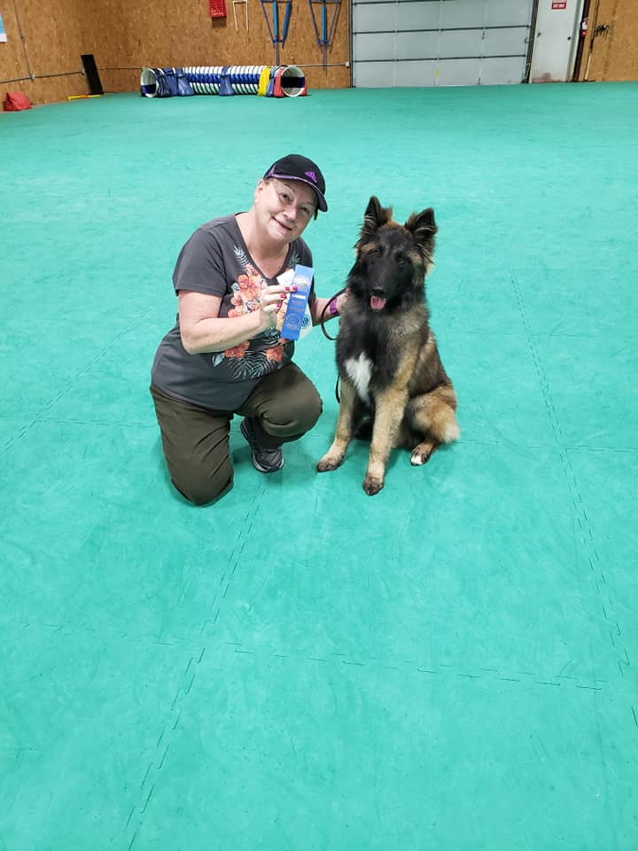 Canine Good Citizen and Trick Dog test day – Top Notch Dog